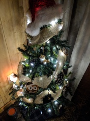 The tree I have in my apartment