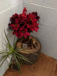 It was amazing how just adding the Poinsettia's to this area really made it feel Christmas like.